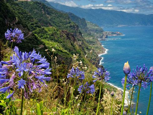 Madeira  Agapanthus  kustgebied
