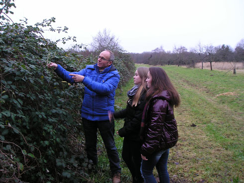 Karst Meijer toont aan studenten een bramensoort namelijk Rubus armeniacus
