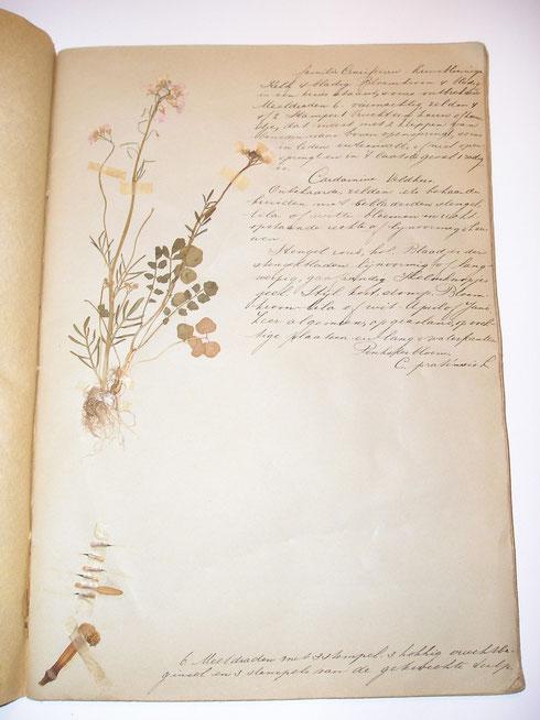 Fraai schoolherbarium  collectie herbarium frisicum