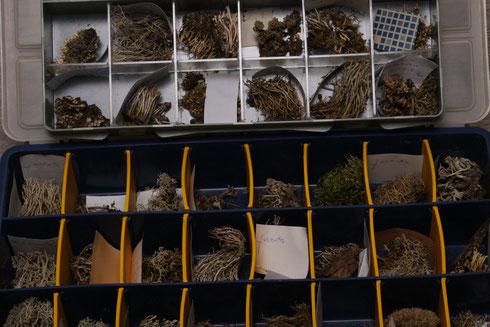 Deel korstmossen collectie herbarium Jan Herman Engelen  collectie herbarium frisicum