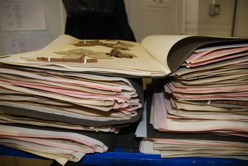 Herbariummateriaal dat ondergebracht kan worden in de grote collectie