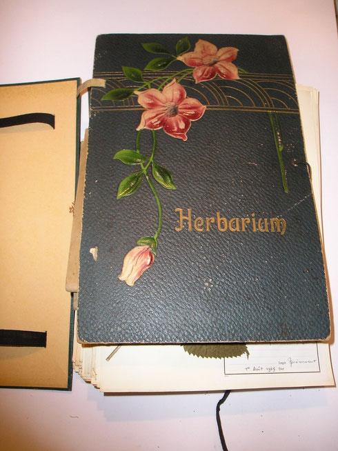 Omslag map in jugendstil uitvoering   collectie herbarium frisicum