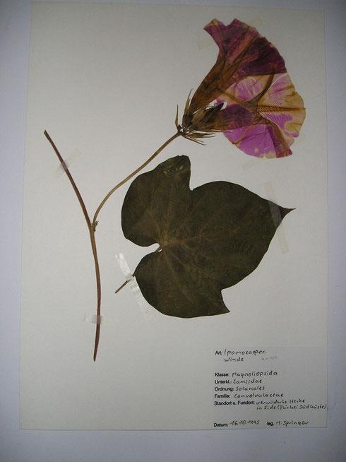 herbarium M.Springer