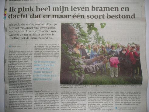 Krantenartikel in het Friesch Dagblad over een bramenexcursie in de noordelijke boswallen van Friesland onder leiding van Karst Meijer juli 2013