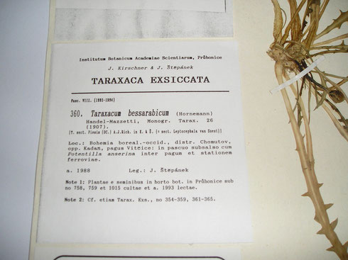 Herbariumetiket Taraxacumcollectie