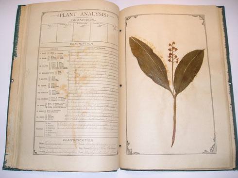 Herbarium pagina  uit herbarium Oliver Best  collectie herbarium frisicum