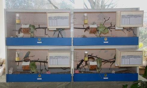 Die 4 Zuchtboxen wurden bezogen und seit 3.3.2015 hängen die neuen Nistkästen daran.