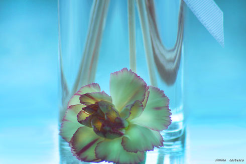 flower blue relax therapy purple clear transparent