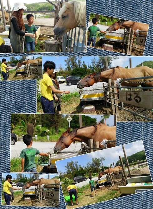 平安座島で馬とふれあい