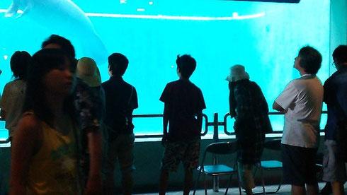 水族館は2年前にも入館したので、無料ゾーンのみでお楽しみ!