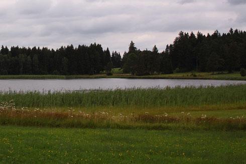 Dieses Stillgewässer, irgendwo im Alpenvorland, bietet einen idealen Lebensraum für die Sibirische Winterlibelle, Sympecma paedisca.