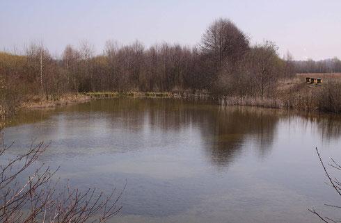 Lebensraum der Gemeinen Winterlibelle, Sympecma fusca.