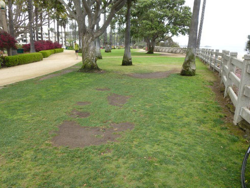 Eroded lawns