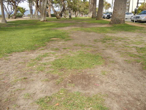 Eroded grass, compacted soils