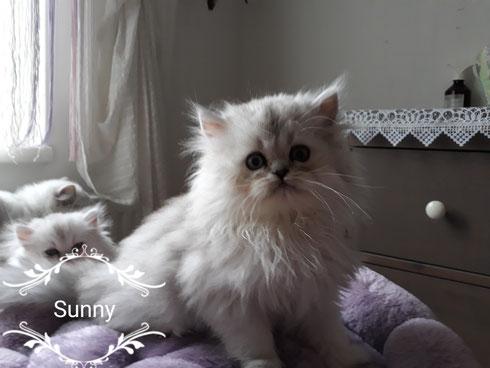 Sunny Silvershaded Boy vergeben