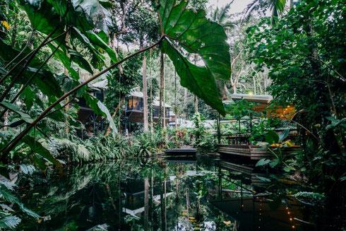 CheckEinfach | Daintree Eco Lodge & Spa