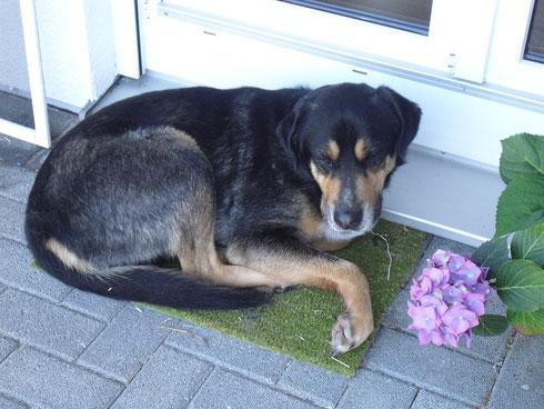 Bubi in seiner neuen Heimat nach ein paar Wochen
