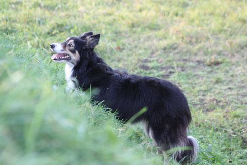 Grace * 24.12.2007