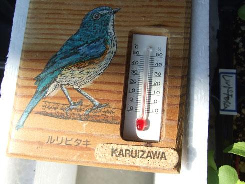 外はまだ寒いので室内で管理。20℃以上。