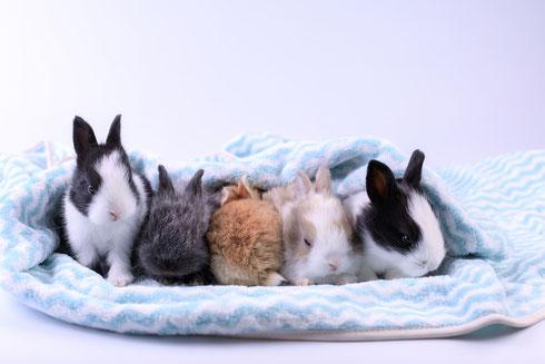 Groupe d'adorables petits lapins