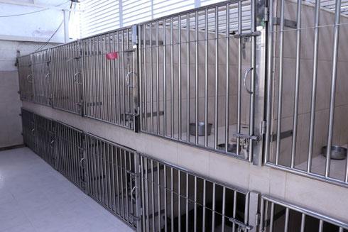 À chaque animal, Chat, chien ou NAC sa cage personnelle