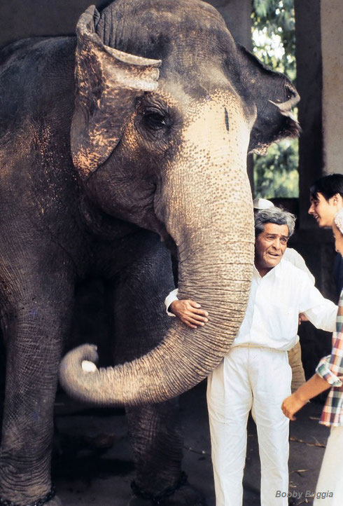Late 1970s - Jal with Baba's favourite elephant at Poona Zoo. Photo taken by Bobbi Buggia.