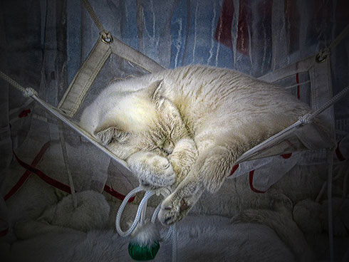 Колыбельная для кота - Мария Горская