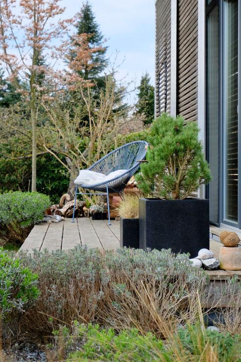 dieartigeGARTEN // März, Wintergarten - Westterrasse+Lavendel, Kiefer, Sommerflieder+Felsenbirne