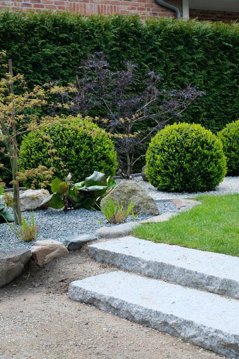 dieartigeGARTEN // Buchskugelbeet Übergang zum Japanischer Bauerngarten - Granitstufen, Natursteinkante mit Japan. Ahorn