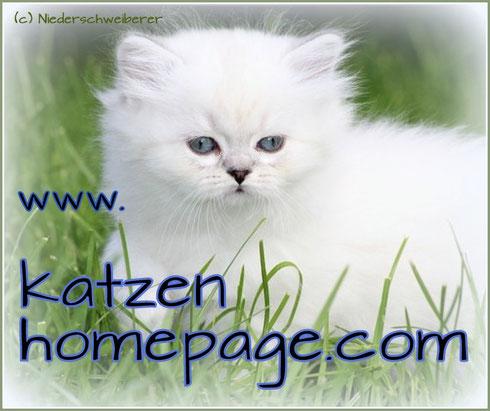 Katzen-Homepage, Homepage für Katzen, Foto: B. Niederscheiberer, bkh-von-der-kampenwand.de
