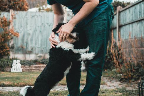 cane da canile fobico sulle persone