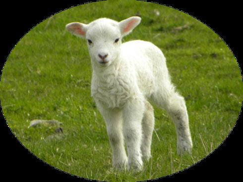 L'agneau est doux et blanc, il est associé à la pureté, à la bienveillance et à la douceur de Jésus, l'Agneau de Dieu qui s'est donné en sacrifice pour nous.