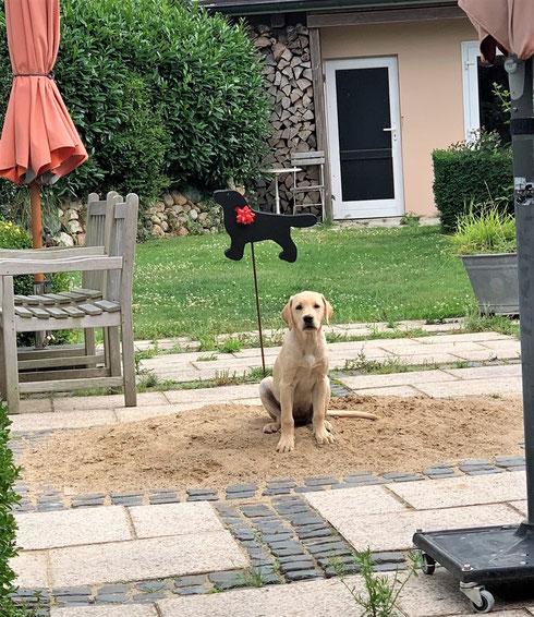 """13 Wochen alt - Foxy auf """"ihrem"""" Sandhaufen"""