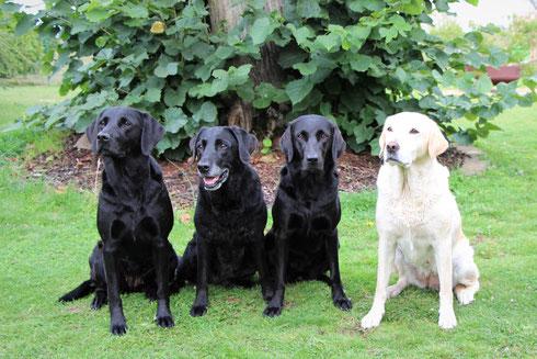 Von links nach rechts: Callie - Isabella - Bee Gee - Brandy