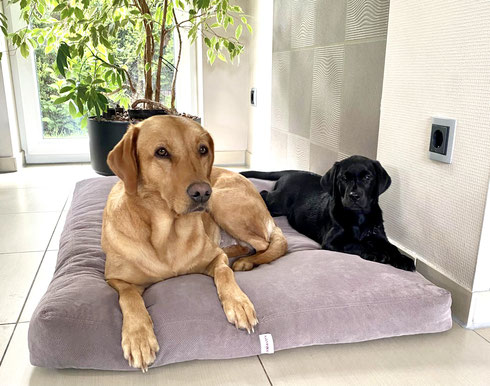 Finny mit großer Halbschwester CP Carly