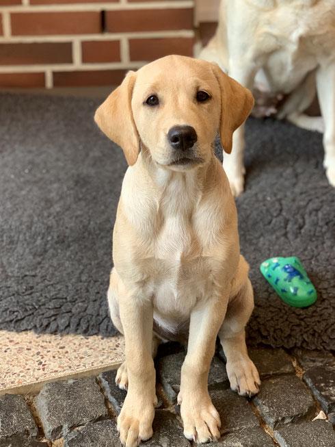 14 Wochen alt