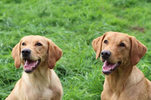Ciwi (links) und Schwester Carly (rechts)