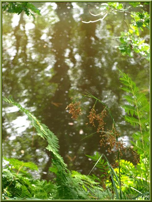 Herbacées, fougères, chêne et reflets sur le Canal des Landes au Parc de la Chêneraie à Gujan-Mestras (Bassin d'Arcachon)