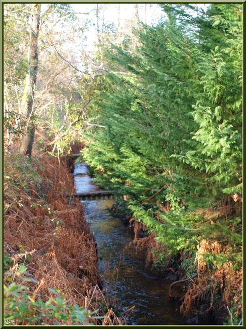 Ruisseau, bras du Canal des Landes au Parc de la Chêneraie à Gujan-Mestras (33)