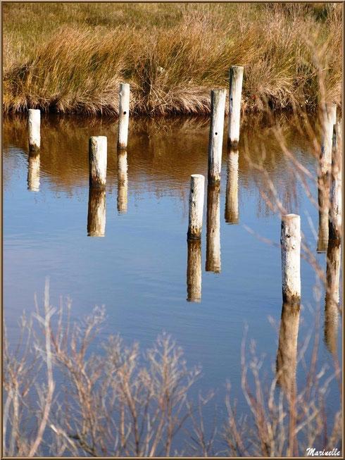 Piquets et leur reflet dans un réservoir, Sentier du Littoral, secteur Domaine de Certes et Graveyron, Bassin d'Arcachon (33)