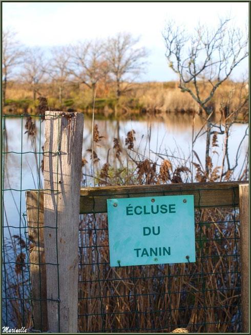 Panneau de l'écluse du Tanin en bordure du sentier, Sentier du Littoral, secteur Port du Teich en longeant La Leyre, Le Teich, Bassin d'Arcachon (33)