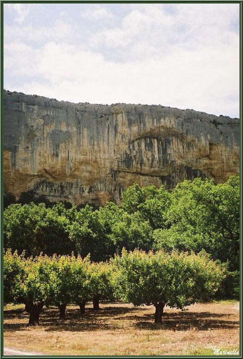 La Falaise de la Madeleine et les cerisiers à l'entrée du village de Lioux, Lubéron (84)