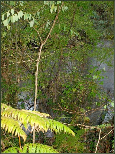 Végétation automnale en bordure du Canal des Landes au Parc de la Chêneraie à Gujan-Mestras (Bassin d'Arcachon)