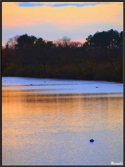Reflets du soleil couchant sur un réservoir, Sentier du Littoral, secteur Port du Teich en longeant La Leyre, Le Teich, Bassin d'Arcachon (33)