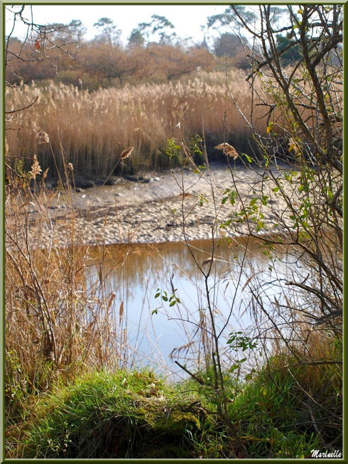 Par endroits, La Leyre coule cachée derrière la végétation, Sentier du Littoral, secteur Port du Teich en longeant La Leyre, Le Teich, Bassin d'Arcachon (33)