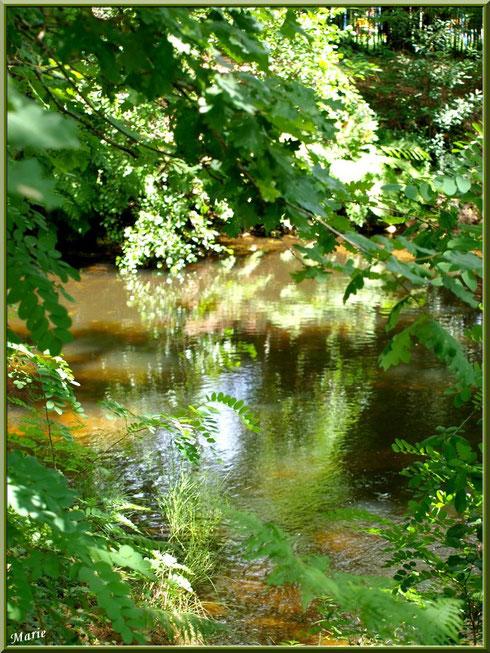 Reflets et verdoyance sur le Canal des Landes au Parc de la Chêneraie à Gujan-Mestras (Bassin d'Arcachon)