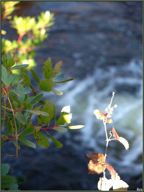 Arbousier et roncier en mi-soleil et reflets sur le Canal des Landes au Parc de la Chêneraie à Gujan-Mestras (Bassin d'Arcachon)