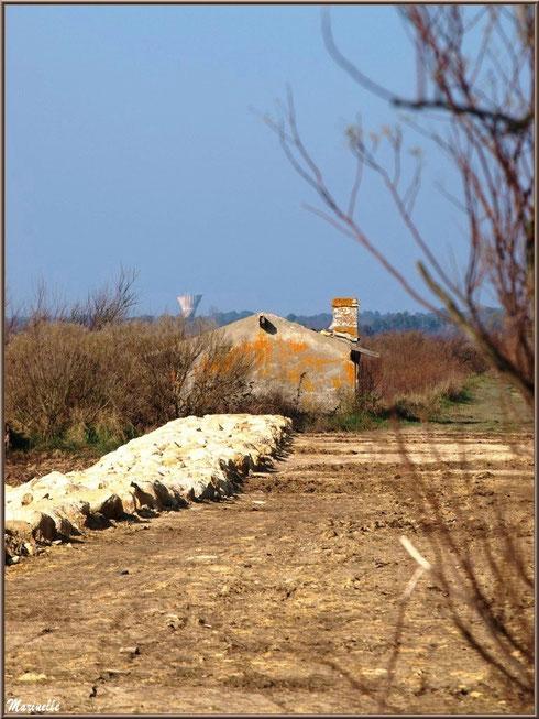 Ruines d'une ancienne maison d'un garde pêche-chasse en bordure du sentier, Sentier du Littoral, secteur Domaine de Certes et Graveyron, Bassin d'Arcachon (33)