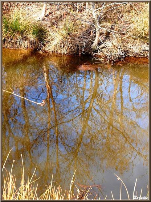Reflets sur le ruisseau bordant le sentier forestier, Sentier du Littoral secteur Pont Neuf, Le Teich, Bassin d'Arcachon (33)
