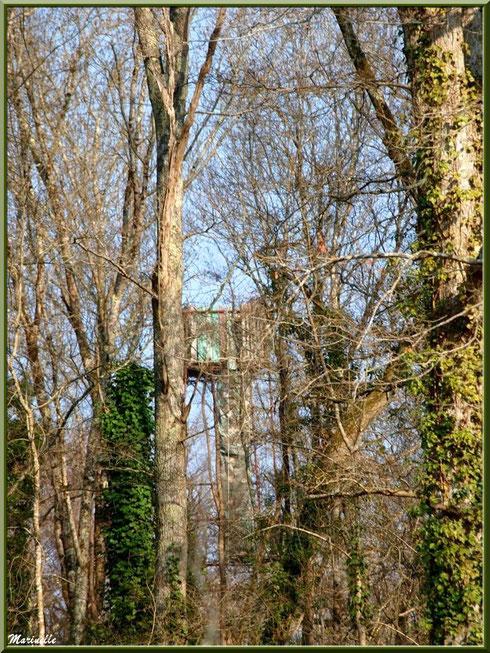 Palombière dans les chênes, Sentier du Littoral secteur Pont Neuf, Le Teich, Bassin d'Arcachon (33)